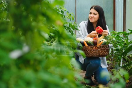 Photo pour Vue d'une jeune femme attirante récoltant des légumes dans une serre - image libre de droit
