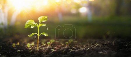Foto de Joven planta en luz del sol, crecimiento vegetal, planta de semillero de planta - Imagen libre de derechos