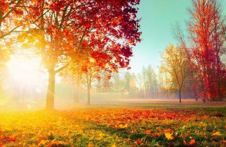 Photo pour Paysage d'automne. Scène d'automne. Arbres et feuilles, Forêt hantée dans les rayons du soleil - image libre de droit