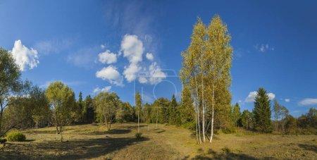 Photo pour Panorama du paysage forestier d'automne avec ciel bleu - image libre de droit
