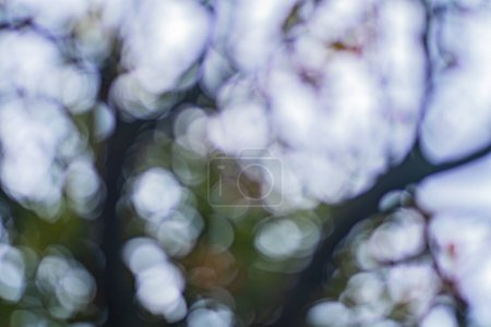 Photo for Soft focus in nature with leaves and tree branches - Royalty Free Image