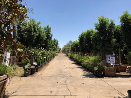 Arizona Landscaping nursery located in East Valley of Arizona which provides all kind trees, palms and shrubs, edibles, including berries, small fruits, vegetables and herbs. These nurseries provide customers to purchase these products for homes.