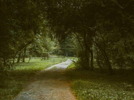 Photo pour Passage mystérieux à travers les bois - image libre de droit