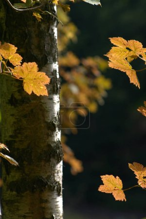 Photo for Green leaves of tree in a forest - Royalty Free Image