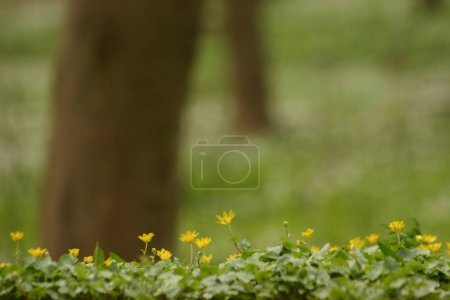 Photo for Beautiful blooming spring flower - Royalty Free Image