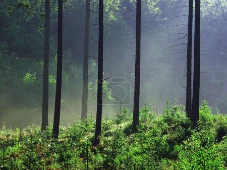 Photo pour Paysage de forêt naturelle belle - image libre de droit
