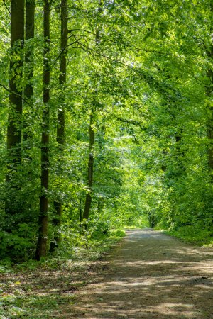 Photo for Scenic path through dense forest with green oak trees - Royalty Free Image