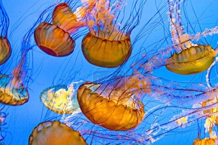 Photo pour Essaim de poissons de la gelée de l'océan profond - image libre de droit