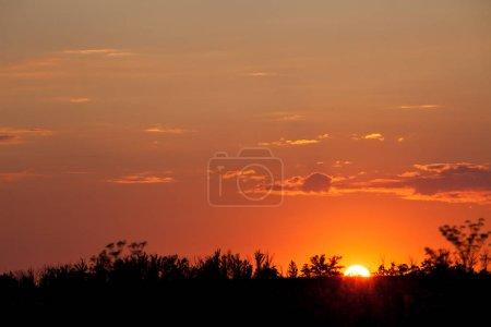 Photo pour Silhouettes d'arbres avec coucher de soleil à fond - image libre de droit