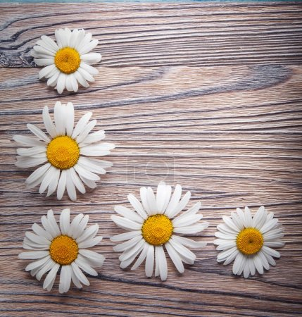 Background of daisies on an old wood board.