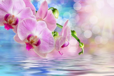 Photo for Close up of orchid flower - Royalty Free Image