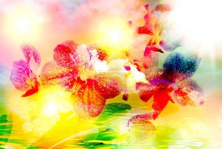 Foto de Primer plano de flor de orquídea - Imagen libre de derechos