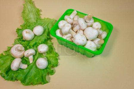 Photo pour Bouchent la vue des champignons champignon frais dans des contenants en plastique et feuilles de salade verte - image libre de droit