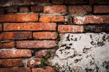 Photo pour Mur de briques vieilli plantes vertes envahissantes - image libre de droit