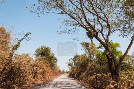 green trees along asphalt road on blue sky background