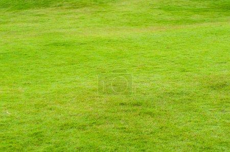Photo pour Herbe verte vide comme fond - image libre de droit