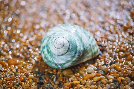 Photo for Close view of sea shell on sand under rain droplets - Royalty Free Image