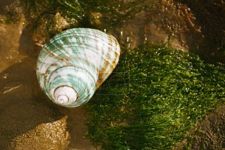 British summer beach with pretty sea shell, sand and seaweed
