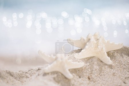 two starfish on beach, soft gentle sunrise light color