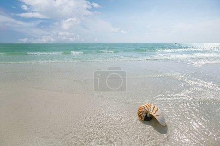 Photo for Nautilus shell with sea waves - Royalty Free Image