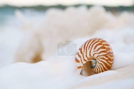 Photo pour Nautilus coquille de mer dans la vague de la mer sur la plage de sable doré avec paysage marin, action en direct - image libre de droit