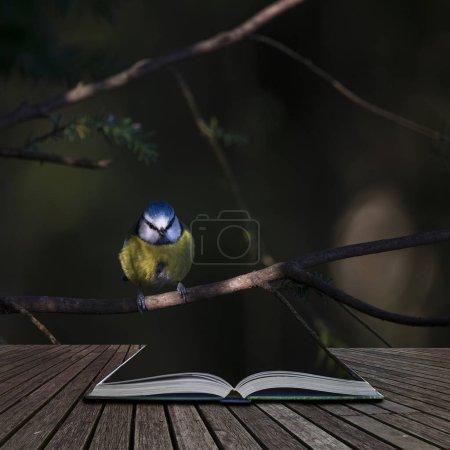Photo pour Beau portrait de Cyanistes Mésanges Caeruleus assis au soleil dans un paysage forestier sortant de pages de livre d'histoire ouverte - image libre de droit