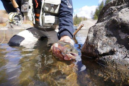 Photo pour Attraper une truite fardée par un pêcheur à la mouche - image libre de droit