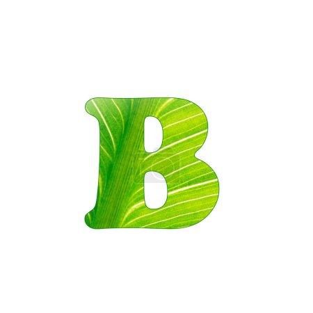 La letra verde de la planta B, letras cortadas del fondo de la hoja verde