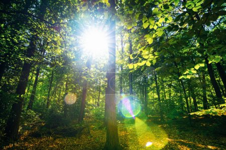 Photo for Silent Forest in spring with beautiful bright sun rays - wanderlust - Royalty Free Image