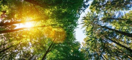 Photo pour Forêt silencieuse au printemps avec de beaux rayons de soleil brillants - wanderlust - image libre de droit
