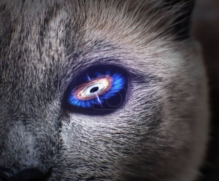 Mysterious cat eye with purple galaxy inside.