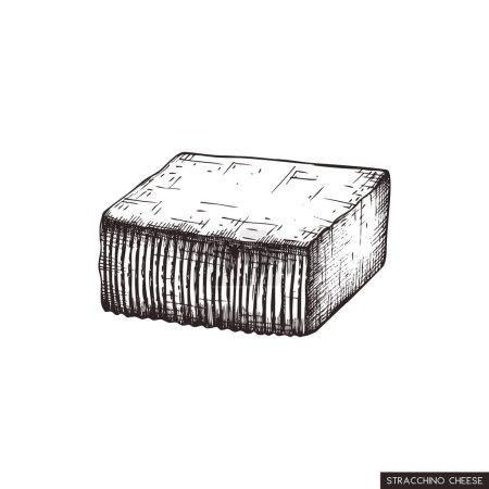 Stracchino cheese vector graphic illustration...