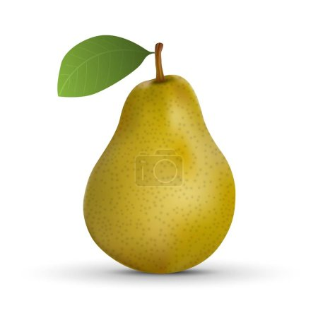 Realistic pear isolated on white background. Vecto...