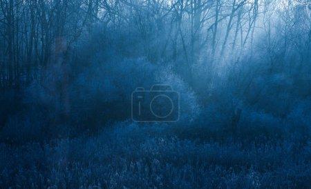 Foto de Vista de ventisca de nieve fuerte en bosque - Imagen libre de derechos