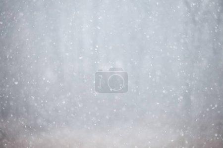 Photo pour Vue du fort blizzard des neiges en forêt - image libre de droit