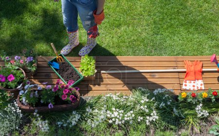 Woman planting colorful flowers in garden