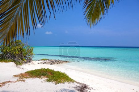 Tropical sandy beach with green palms and blue water