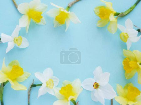 Photo pour Jonquilles blanches et jaunes sur fond bleu vif - image libre de droit