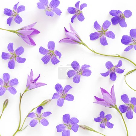Seamless pattern of violet wildflowers and bellflowers isolated on white background