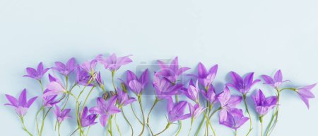 Floral border made of violet bellflowers on pastel...