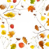 Autumn leaves and acorns natural background with place for text