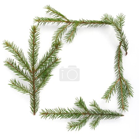 Photo for Composition of evergreen fir twigs with copyspace - Royalty Free Image