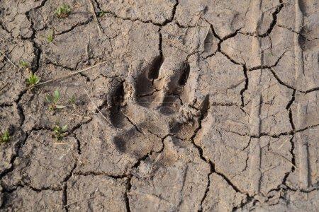 Foto de Perros pista en el barro - de cerca - Imagen libre de derechos