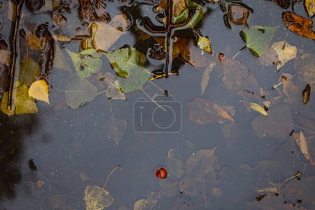 Autumn background with yellow leaves in puddle of wet asphalt