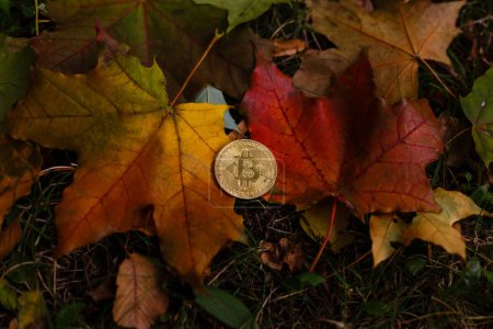 Photo for Bitcoin with yellow autumn leaves on nature background - Royalty Free Image