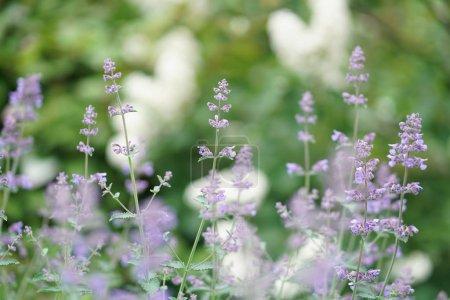 Photo pour Beau jardin d'été vert lumineux - image libre de droit