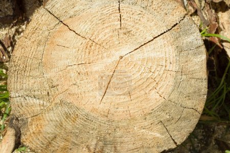 Photo for The old wood texture with natural patterns with cracked color, background. - Royalty Free Image