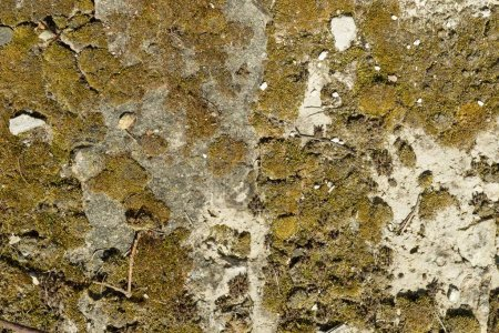 Foto de Textura de hormigón, cemento, antiguo fondo cubierto de musgo - Imagen libre de derechos