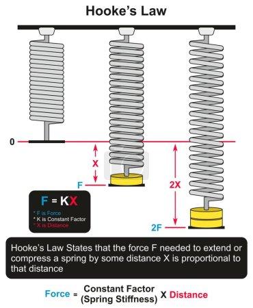 Ilustración de Diagrama de Hookes ley infografía con un ejemplo de tres muelles uno en reposo y otros dos con diferentes fuerzas aplicadas y diferentes distancias para Ciencias de la educación física - Imagen libre de derechos