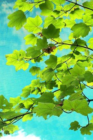 Photo pour Beaux lacs de Plitvice en Croatie à la fin la saison estivale, avec eau propre pure et de la réflexion d'arbres dedans, incroyable réserve naturelle au cœur de l'Europe - image libre de droit